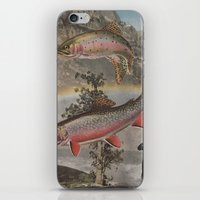 trout iPhone & iPod Skins featuring Rainbow Trout by Mitch Meseke
