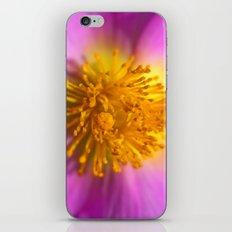 Cistus Albidus 30-26 iPhone & iPod Skin