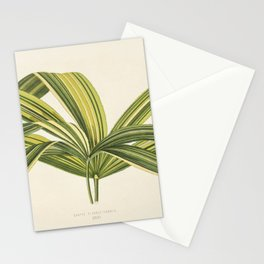 Slender Lady Palm (Rhapis Flabelliformis) engraved by Benjamin Fawcett (1808-1893) for Shirley Hibbe Stationery Cards