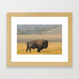 Buffalo at Yellowstone #1 Framed Art Print