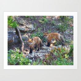 fox 2018-7 Art Print