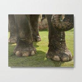 Elephant Toes Metal Print