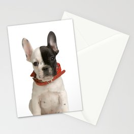 Boston Terrier Puppy Stationery Cards