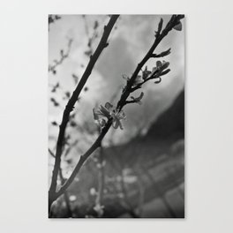 Faded spring Canvas Print