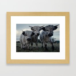The Three Shaggy Cows Framed Art Print