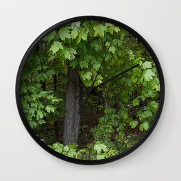Forest Photography, Trail of Tears, Golconda Illinois Wall Clock