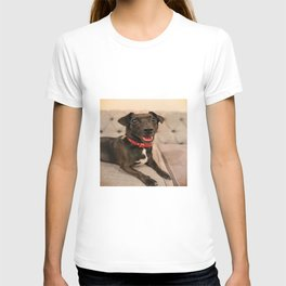 Black Jack Russell / Chihuahua T-shirt