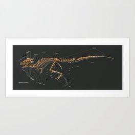 Pachycephalosaurus Wyomingensis Skeleton Study Art Print