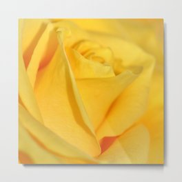 Rose yellow 258 Metal Print