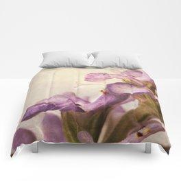 Salvia atropatana Comforters