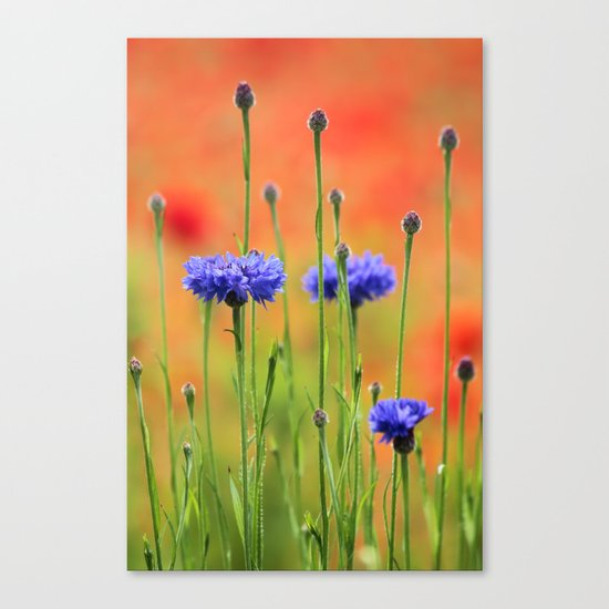 Sapphires and Rubies Canvas Print