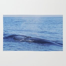Tropical whale: The Bryde´s whale Rug