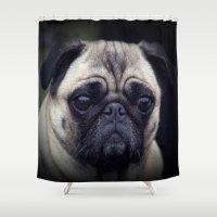 pug Shower Curtains featuring Pug by Malgorzata Zabawa