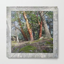 MADRONA WOODS Metal Print