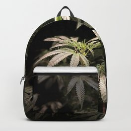 Shining in Black Backpack