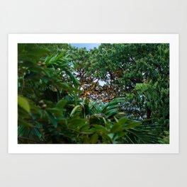 Trees in Siem Reap  Art Print