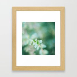Leaves in summer Framed Art Print