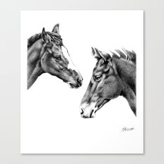 Foal Friends Canvas Print