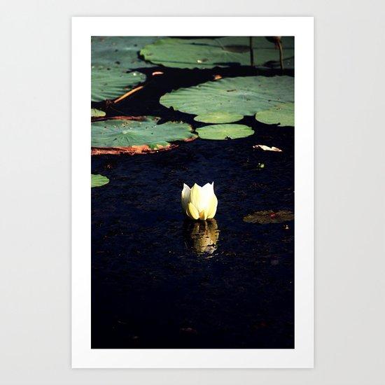 Lone lotus Art Print