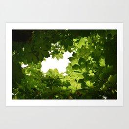 Buckeye Canopy Art Print