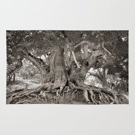 1000 years old chestnut tree Rug