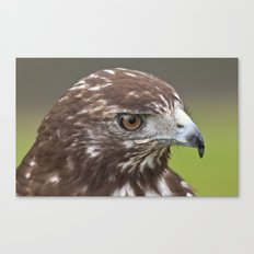 Red-tailed Hawk Portrait Canvas Print