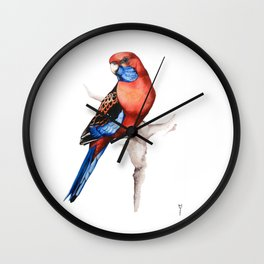 Crimson Rosella Parrot bird Wall Clock