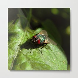 But A Fly Metal Print