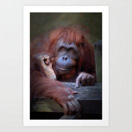 Female Bornean Orangutan Art Print