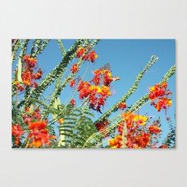 Ocotillo Blooms Canvas Print