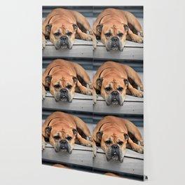 Continental Bulldog on the Porch Wallpaper