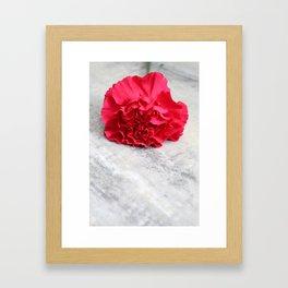 One Pink Carnation Framed Art Print