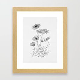 Calendula Flowers Framed Art Print