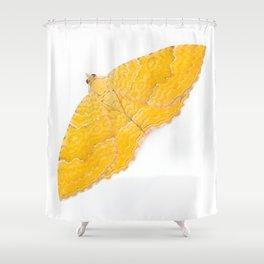 Yellow Shell Moth Shower Curtain
