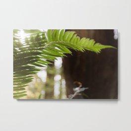 Under the Redwoods Metal Print