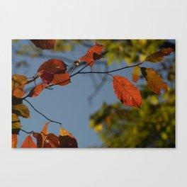Cooper's Fall Canvas Print