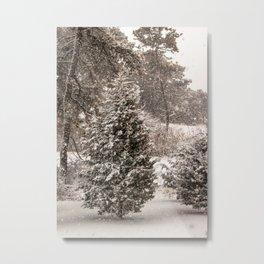 Nantucket Winter #2 Metal Print