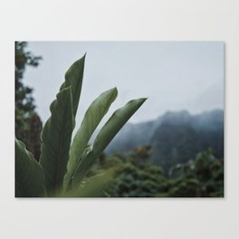 Rainforest Raindrops Canvas Print