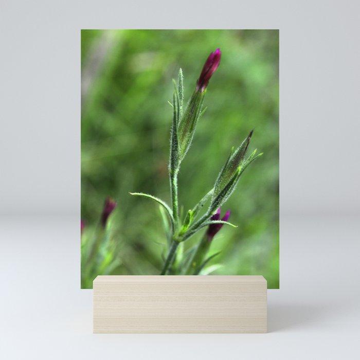 Pink Lipstick Flower Buds Mini Art Print