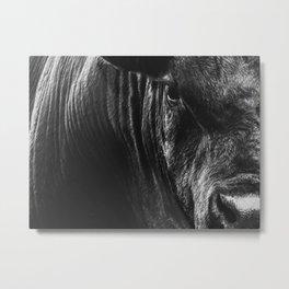 Big Black Angus Bull Stare Metal Print