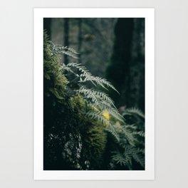 Ferns VII Art Print