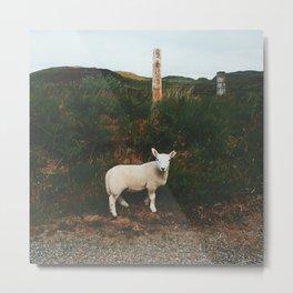 Little Lamb, Isle Of Mull Metal Print