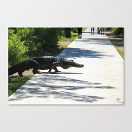 Carolina Gator Crossing 1 Canvas Print