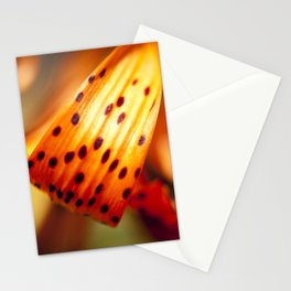 Vibrant Color Stationery Cards