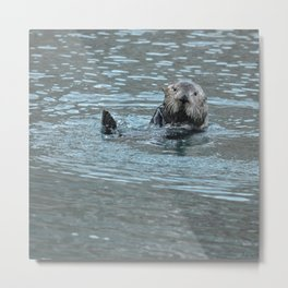 Sea Otter Fellow Metal Print