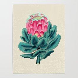 Protea flower garden Poster