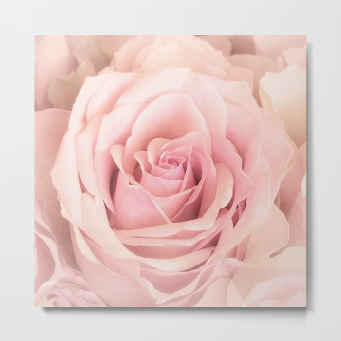 A rose is a rose - Wonderful pink Rose flower Metal Print