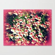 minis Canvas Print