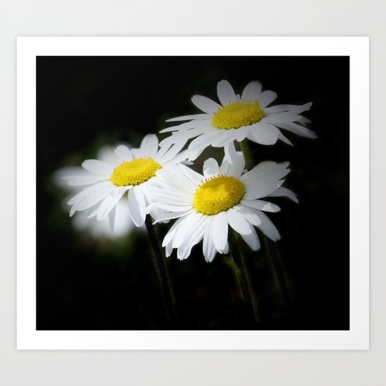 daisies on black Art Print