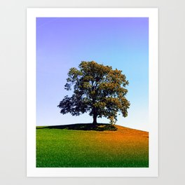 Posing tree on a hill in summertime Art Print
